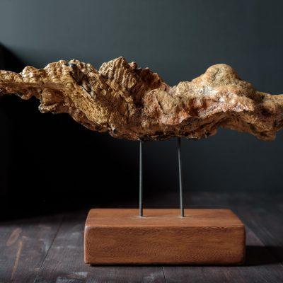 """Escultura de raíz de haya """"Garras en la tierra"""""""
