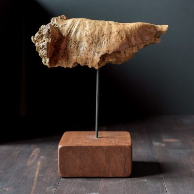 "Escultura raiz de madera de haya ""Hueso"""